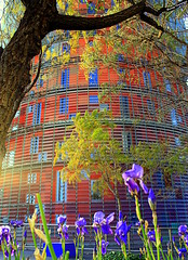 Se acerca la primavera / S'acosta la primavera / The spring is comming (Ferny Carreras) Tags: barcelona flowers blue red espaa sun flores tree verde green primavera sol colors azul arbol spring spain rojo colours torre pov bcn catalonia colores vermell catalunya blau arbre torreagbar catalua verd agbar barna flors lirios ramas espanya brancas liris