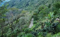 Carretera Sonsn Aguadas (Ivan Mauricio Agudelo Velasquez) Tags: mountain tree rural forest arbol carretera via bosque montaa cafetal