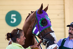 California Chrome (pbuschmann) Tags: belmont churchilldowns triplecrown kentuckyderby preaknessstakes americanthoroughbred raulrodriguez perrymartin harrisfarms californiachrome santaanitaderby2014 artsherman kentuckyderby2014 dumpasspartners