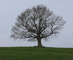 Tree (ART NAHPRO) Tags: rural sussex spring country april 2014