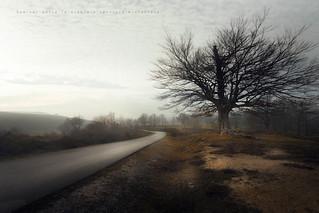 Caminar entre la niebla y sentirse misterioso