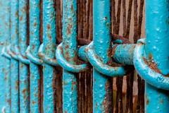 blue fence (ToDoe) Tags: fence zaun rings ringe rost rusty rostig blue blau patterns structure bokeh dof
