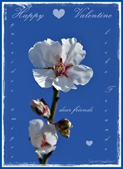 * Happy Valentine * (♥ explored - thank you ♥)  .  _DSC5603-001 (Maya HK - On and Off) Tags: 140217 2017 congratulations copyrightbymayawaltihk españa felicidades flickr frühling glückwünsche glückwunschkarte glückwunschkarten gratulationen macro makro mandelbäume mandelbaumprunusdulcis mandelblüten mandelblütenzeit murciaprovinz nikond3200 pflanzen plantas plants provinciademurcia provinzmurcia prunusdulcis sanvalentín spain spanien valentinesday2017 valentinstag2017 inexplore explored explore