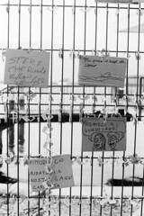 Due giorni dopo... (sirio174 (anche su Lomography)) Tags: lucchetti protesta lungolago lagodicomo paratie antiesondazione cantiere scempio spreco italia italy