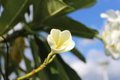 IMG_0549 (Psalm 19:1 Photography) Tags: hawaii oahu diamond head polynesian cultural center waikiki haleiwa laie waimea valley falls
