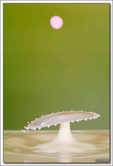 Collision de Gouttes (schebre) Tags: milk drop droplet gouttes lait