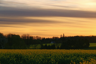Quand la terre et le ciel sont d'or.//  When the earth and the sky are golden.