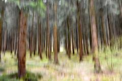 fairy tale forest (heuwieser) Tags: nikon d7200 creative schwäbischealb albstadt traufgang spring forest