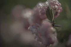 Vorfrühling (mo vidal) Tags: frühling blumen grün weis licht jugendzeit frühjahr blatt