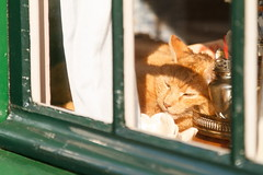 IMG_5403 (Ing. Pdiablos) Tags: amsterdam holland olanda mood gatto cat window finestra rest peace riposo pace