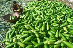 Vegetable seller! (ashik mahmud 1847) Tags: bangladesh d5100 nikkor vegetables group shop market people light color green