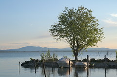 boats waiting to go on the lake (phacelias) Tags: barche boats boten tree boom albero trasimenolake lagoditrasimeno trasimenomeer lago lake meer
