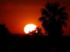Fire In The Sky (Scott Douglas Worldwide) Tags: az arizona awesome america sky s sunrays smiling sun sunset sexy sunrise p perfect peaceful paradise palmtree palm palms palmtress pretty beautiful badass b bright yumaaz yuma y yy