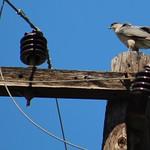 Suburban Wildlife thumbnail