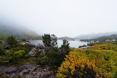 20170425-12-Mist over Tarn Shelf (Roger T Wong) Tags: 2017 australia mtfield mtfieldnationalpark np nationalpark nothofagusgunnii rogertwong sel1635z sony1635 sonya7ii sonyalpha7ii sonyfe1635mmf4zaosscarlzeissvariotessart sonyilce7m2 tarnshelf tasmania bushwalk deciduousbeech fagus fog hike mist orange outdoors tramp trek walk