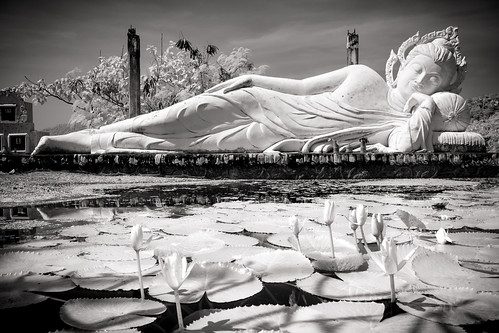 Buddha and Water Lillies
