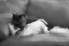 Night (SopheNic (DavidSenaPhoto)) Tags: fujinon35mmf14 night icm cat rip gonzo impressionisticphotography xe1 intentionalcameramovement sleeping fuji fujifilm monochrome multipleexposure blackandwhite bw impressionism