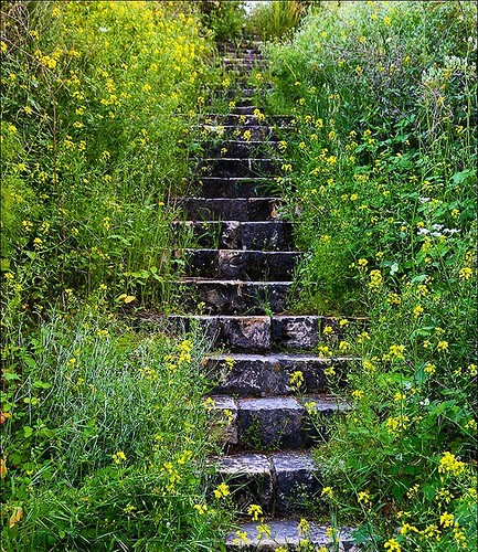 Stairway to the past - 2. Лестница в прошлое - 2. #israel #israel_best #israel_photographers #stairway #flower #flowers #nostalgic #old #past