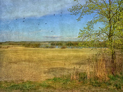 On the countryside. (Bessula) Tags: bessula natures tree countryside river sky birds texture sweden scenery landscape field scenic creation rural