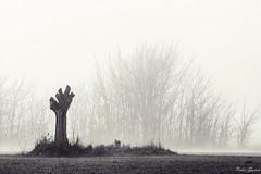 Fog (Peideluo) Tags: fog tree niebla arboles monocrome monocromo landscape paisaje nature