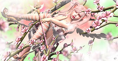 SpringContest~meriluu17~Sakura Angel (meriluu17) Tags: astralia una foxcity sakura flower flowers nature kawaii angel angelic fairy fae tree branch branches petal anime people portrait fantasy magical surreal rose roses pink pastel