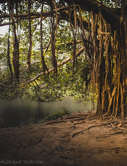 trees (1 of 1) (Ashique Ridwan) Tags: natural noir land dusk daytime dhaka bangladesh dhanmondi lake reflection green branch leaves water soil sun evening springtime light trees new asian