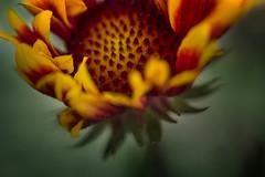 stillness (55randomclicks) Tags: poetry nature