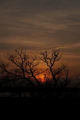 Ljus och skugga (tusenord) Tags: himmel solnedgång fotosondag träd siluett motsatser sunset fs170409 silhouette tree