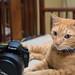Canon Cat! 😺