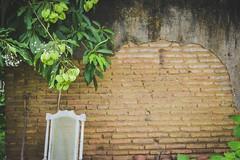 Lemon wall (gisellyp) Tags: wall lemon tree brick nature