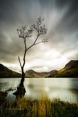 Lone Tree Buttermere (Mark Lindstrom) Tags: lonetree leelittlestopper lakes buttermere longexposure canon1635f4 mountains canon5dmk3 lakedistrict cumbria