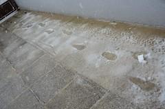 Sealt tuli Paula : ) (anuwintschalek) Tags: nikond7000 d7k 18140vr austria niederösterreich wienerneustadt kodu home kevad april frühling spring lumi snow schnee lörts schneeregen lapsed jäljed paula spuren fussspuren jalajäljed footprints