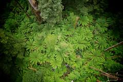 AU021321 (zkhan75) Tags: 12apostles daytrip family fun greatoceanroad otway treetopwalk princetown00 victoria australia