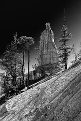 Bryce Canyon, Utah (leehobbi) Tags: bryce canyon national park utah peekaboo trail landscape outdoors bw blackandwhite