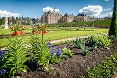 Tuin van Paleis het Loo (Jaap Mechielsen) Tags: paleishetloo palace nederland flower gelderland architecture apeldoorn thenetherlands europe bloemen flora bloem europa hetloopalace paleis nl