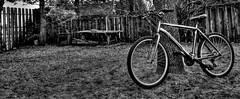 Needs a Tune Up (Cindy's Here) Tags: bicycleday bike bw tree canon 21 117 april2017