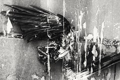 Wing (M N Edwards) Tags: monochrome doubleexposure blackandwhitephotography blackandwhite bird wing aberystwyth distressed skeleton fujifilm xpro1 27mm