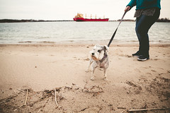 (Kayla Hill Photography) Tags: pet dog beach iroquois