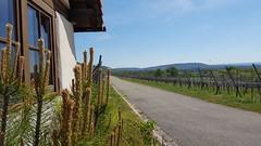 It's a long way (joe-so) Tags: weinberg weg road berge hills mountains simplysuperb beautifulexpression zoomin joeso