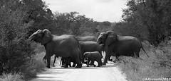 """Kruger Park (Andre """"Luz"""" Azevedo) Tags: africa park animals nikon south mammals kruger d3100"""
