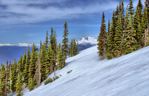 Snow Mountain, Ski Slope, And Tall Trees At Whistler, BC, Canada