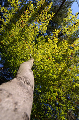 Under the Tree (VolHaPhoto) Tags: tree nature les forest czechrepublic leafs strom strain voderadskebuciny