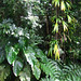 Rainforest Canopy Tour, Dominica