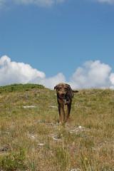 (bwv1013) Tags: dog hiking olympus guide