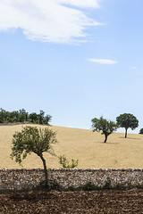 Basilicata - Lucania (Matteo Melchior) Tags: italy italia mare estate basilicata cielo campo terra salento puglia sud vento grano caldo lucania