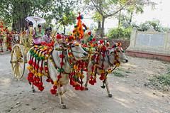 Shinbyu procession to the monastery (Artypixall) Tags: family friends burma celebration myanmar procession mandalay sunumbrella oxcart oxes shinbyu samanera novitiationceremony inwaisland buddhistmonkordination