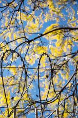Na rua // 02 (Ricardo Bess) Tags: blue yellow azul wire amarelo arame farpado barded