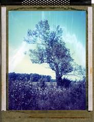 glacier ridge (er_code_blue) Tags: film analog polaroid instant 4x5 expired 90mm largeformat 59 graflex crowngraphic