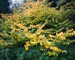 Tervuren's Arboretum (lolitanie) Tags: park autumn fall automne belgium belgique belgie arboretum tervuren parc fort flanders tervueren tervren