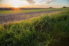 evening (in-fluenz) Tags: floral herbst landwirtschaft natur experiment wolken gras grün landschaft wetter farben zufall unschärfe perspekive